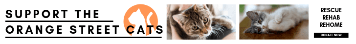 Support Orange Street Cats